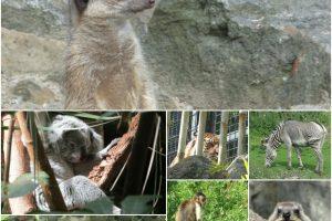 Edinburgh Zoo 2016