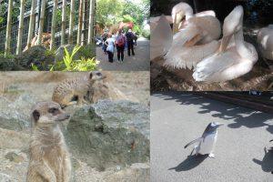 Gallery image - Edinburgh Zoo 2016