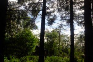 Gallery image - Hide at Eskrigg Nature Reserve