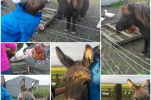 Sue Munroe's Smallholding, group outing
