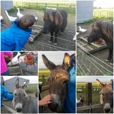 Collection of images from our Group Outing to Sue Munroe's smallholding near Wigtown.