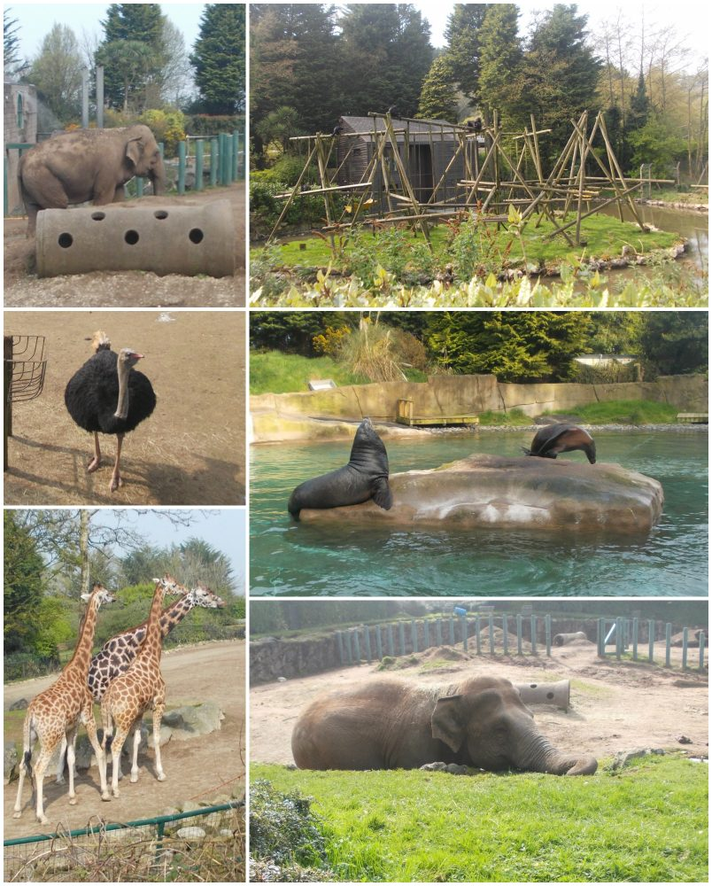 Group Outing to Belfast Zoo 18th April 2019