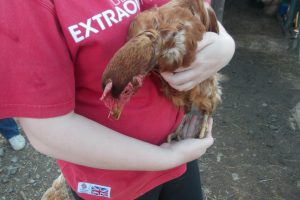 Young Person holding a hen at Sue Munroe's smallholding near Wigtown