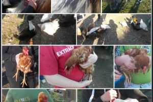 Group outing to Sue Munroe's smallholding near Wigtown. Showing pony's, donkey, hens and ducks